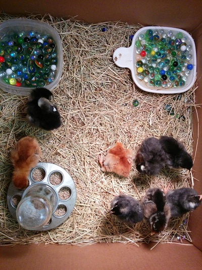 Recently hatched... The one in the middle didn't make it.
