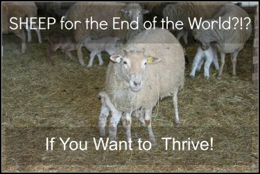 SHEEP for the End of the World?!? If You Want to Thrive!