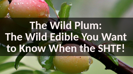 The Wild Plum – The Wild Edible You Want to Know When the SHTF!